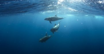 What You Can Do to Help Ocean Conservation